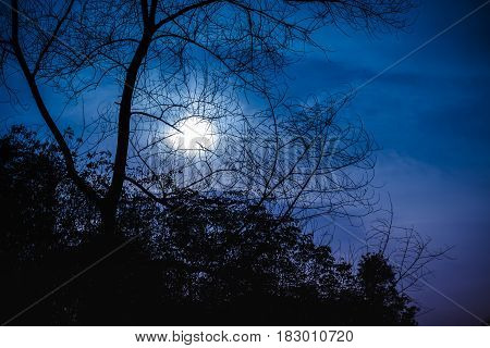 Silhouette Of Dry Tree Against Night Sky With Beautiful Moonlight. Outdoor.