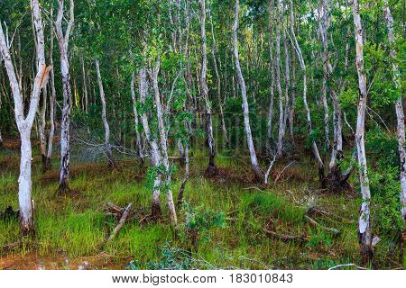 Colorful landscape of green swamp forest with root. Springtime alder bog woods in morning with sunlight. Beautiful summer day over tranquil nature background.