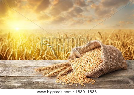 still life scattered  grains of bulgur and ears of wheat on table with ripe cereal field on the background.  Golden wheat field on sunset. Healthy eating for diet and vegan. Photo with place for text