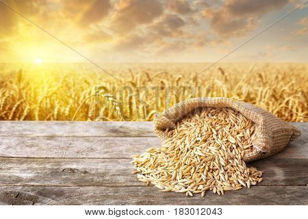 uncooked grains of oat with husk scattered out of the bag on wooden table with field on the background. Cereal grains. Golden field on sunset. Agriculture and harvest concept