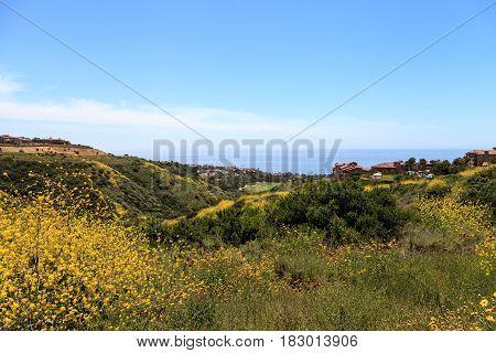 Green plants along Newport Coast hiking trail near Crystal Cove California in spring