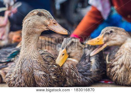 Duck For Sale On The Vietnamese Market. Asian Cuisine Concept