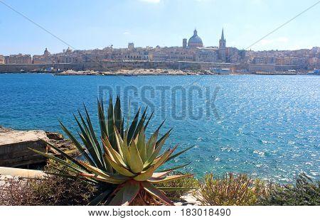 Valletta seen from Sliema, cacti in foreground