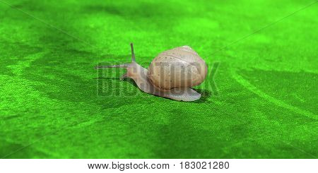 Beautiful charismatic snail sitting on the green leaf.