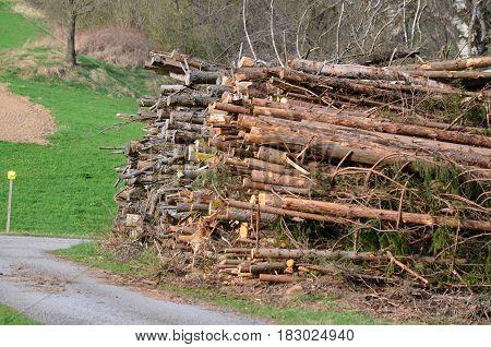 cut tree branches trimmed South Bohemia Czech Republic