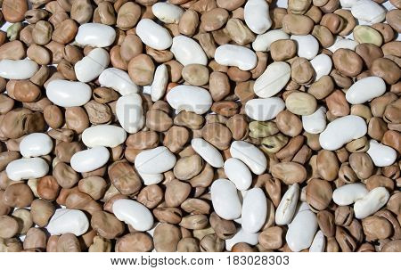 White beans and brown beans can be used as a background