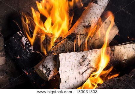 Burning birch logs in bonfire. Fire and embers background. Burning firewoods.