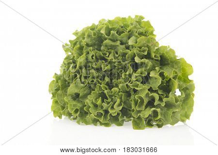 Fresh crop green lettuce isolated over white background