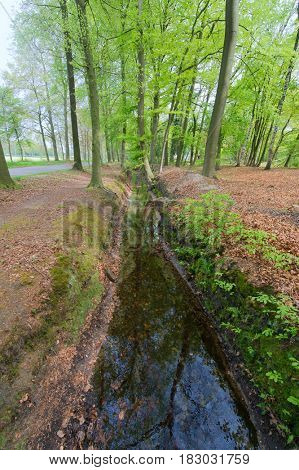 Water ditch in the green forest