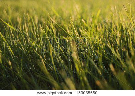 green grass, sunset, summer, hot, wellness, yoga concept, health