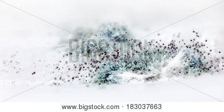 Blue Mold