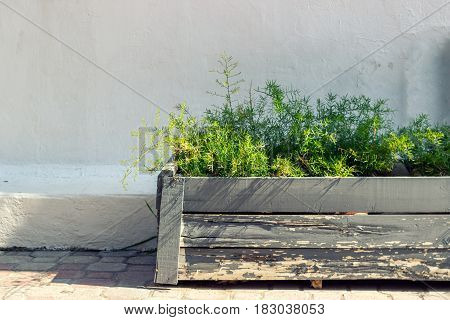 Old gray wooden flowerpot against white wall