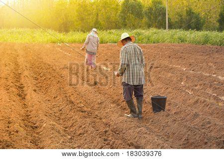 Man working in the garden for seeding in the garden.