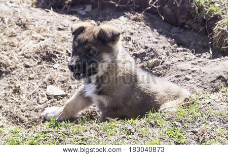 Puppy of the pet dog on background of the land with green herb