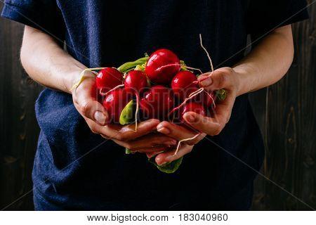Organic Fresh Harvested Vegetables. Farmer's Hands Holding Fresh Radish, Closeup