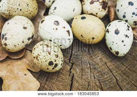 Group of quail eggs and oak leafs on wooden surface . Natural healthy food concept.