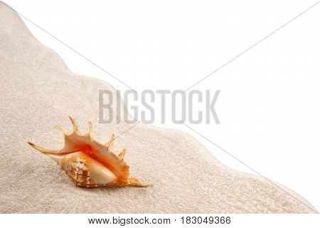 Shell on the sand as background on a white background