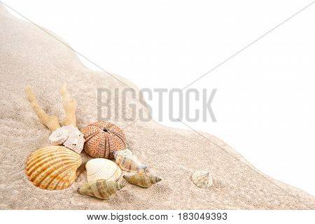 Shell Coral and Dried Sea Urchins on the sand as background