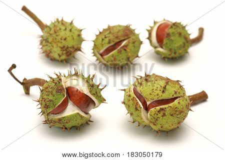 Horse chestnut (Aesculus L.) - fruit on a white background