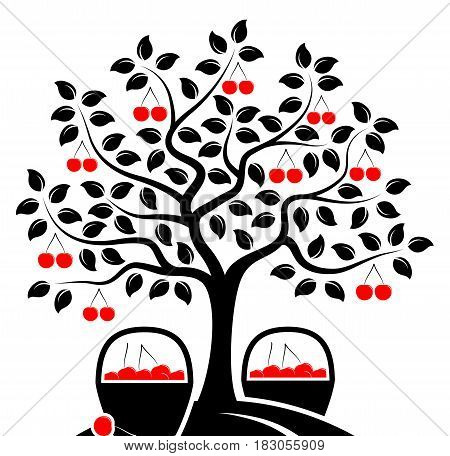 vector cherry tree and baskets of cherries isolated on white background