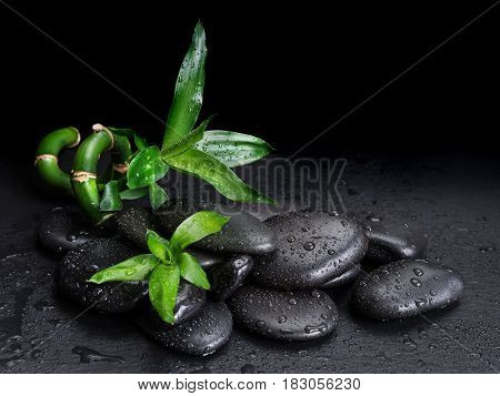 Spa concept with black basalt massage stones and green bamboo sprout covered with water drops on a black background