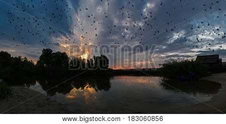Flock of birds flying over the evening river bay