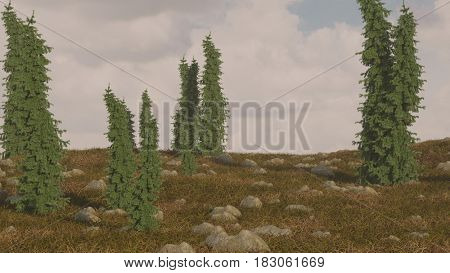 3d illustration of the hill with fir trees and stones