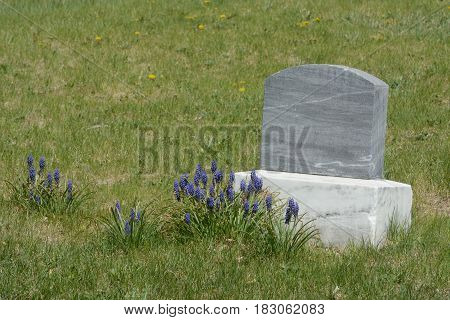 Unmarked gravestone with spring lavender flowers blooming