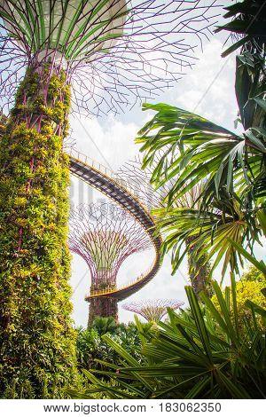 Singapore Gardens by the Bay, bridge among trees