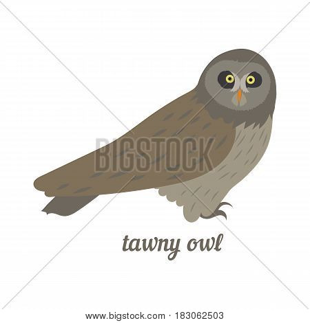 Colorful illustration of grey owl. Vector bird icon. Isolated on white background. Flat design.