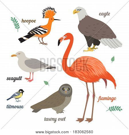 Set of birds. Vector illustration of different colorful birds. Flamingo, seagull, american eagle, titmouse, grey owl and hoopoe.  Isolated on white background. Flat design.