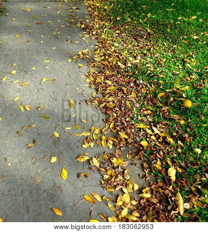 Autumn season is coming, yellow leaves and dry ones lying on the floor. Fall concept