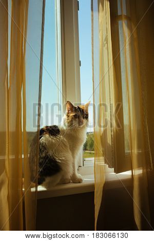 Ginger Ttree Color Cat Is Sitting On Window Sill Warm Toning Image. Lifestyle Pet Concept.