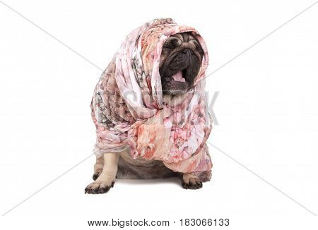 cute pug puppy dog with headscarf sitting down yawning isolated on white background