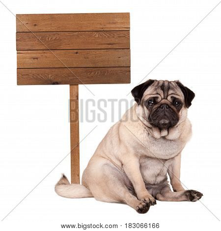 lovely cute pug puppy dog sitting down next to blank wooden sign on pole isolated on white background