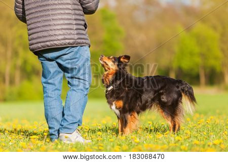 Man With An Australian Shepherds