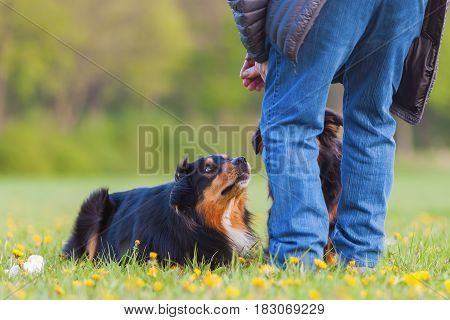 Man With Two Australian Shepherds