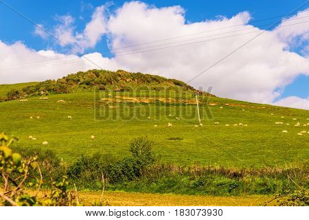 View of a high mountain strewn with green grass a flock of sheep grazing agricultural industry