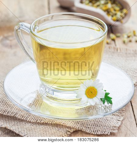 Chamomile tea in glass cup chamomile flowers and dry tea on background square format
