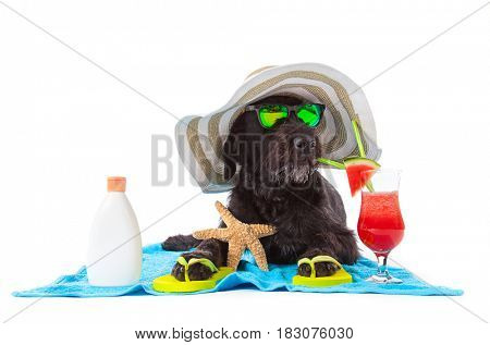 Black mutt dog posing on white background with colorful cocktail.
