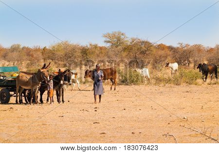 Maun, Botswana - August 29, 2007; Poor woman and boy with donkeys and cart tend cattle in harsh dry Arfican landscape near Maun trying to eek out a living