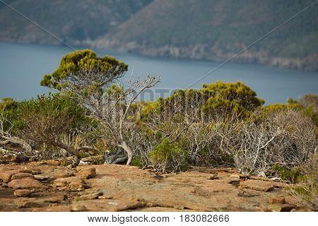 Bush vegetation in Tasmanian Peninsula