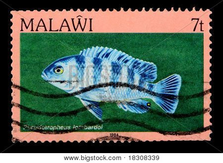 Malawi - Circa 1984: A 7-tambala Stamp Printed In Malawi Shows The Freshwater Cichlid Fish Pseodotro