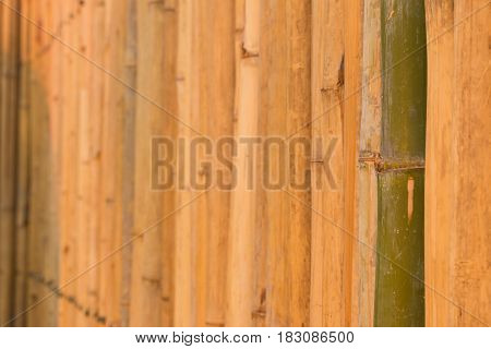 the Wall made of bamboo in Thailand