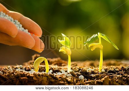 Male hand giving fertilizer to sprout grow step with sunlight
