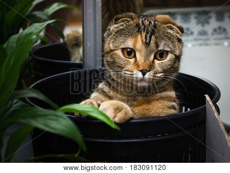 Funny cat sitting and hiding in the trash bin and look. Funny pets background.