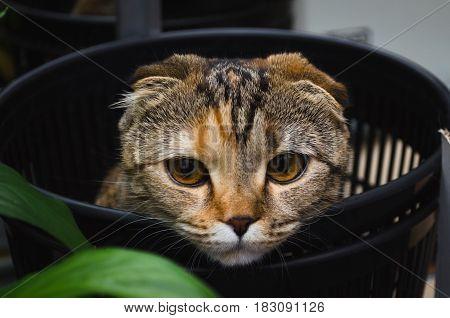 Sad cat in trash bin. Cat hiding in recycler bin.Funny pet.