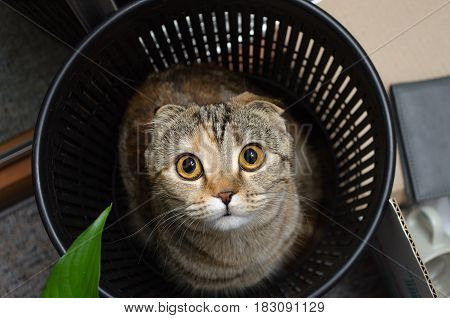 Cat in trash bin. Funny cat hiding in recycler bin. Funny pet .