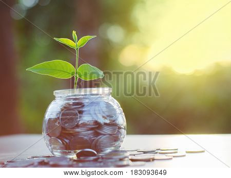 Hope of investor conceptSprout growing on money pile of glass jar bank