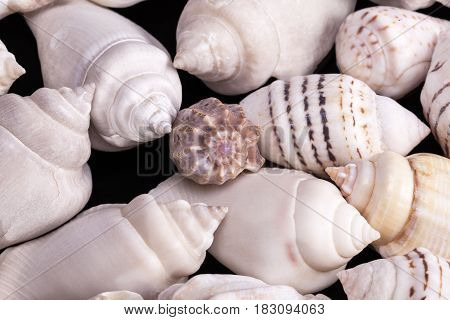 Collection of various kinds of sea shells on black background